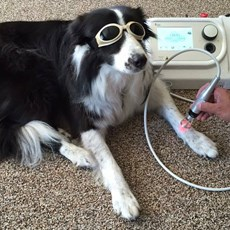 World Veterinary Day, Laser Therapy is the New Ally in Healtcare and Wellness of Animals